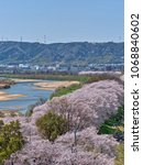 Small photo of Cherry blossoms at Yodogawa River Park separation levee seen from the observatory