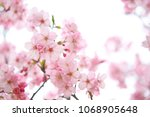 nature flower image | Shutterstock . vector #1068905648