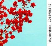 tropical flower. canary islands.... | Shutterstock . vector #1068906542