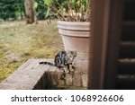 cat is sitting on the threshold ... | Shutterstock . vector #1068926606