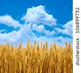 wheat field with blue sky   Shutterstock . vector #106899752