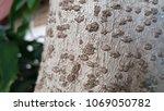 bark tree texture background   Shutterstock . vector #1069050782