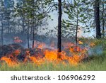 Coniferous Forest In Fire ...