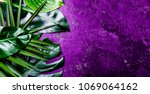 creative tropical leaves... | Shutterstock . vector #1069064162