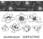 drawing magnolia flowers black... | Shutterstock .eps vector #1069127042