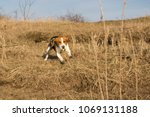 Stock photo dog is running down the hill 1069131188