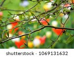 green trees and colorful tulips ...   Shutterstock . vector #1069131632