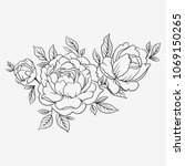 hand drawn roses. three rose... | Shutterstock .eps vector #1069150265