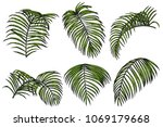areca palm sketch by hand... | Shutterstock .eps vector #1069179668
