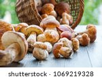Autumn Cep Mushrooms. Basket...