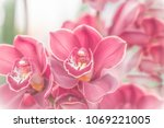 close up of pink  orchid in... | Shutterstock . vector #1069221005