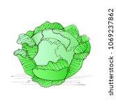 vector green liner cabbage....   Shutterstock .eps vector #1069237862