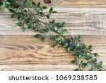 fresh green vine with many... | Shutterstock . vector #1069238585