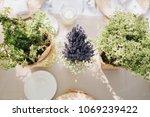 on festive table in wedding... | Shutterstock . vector #1069239422