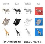 african zebra  animal koala ... | Shutterstock .eps vector #1069270766