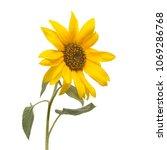 flower of sunflower isolated on ... | Shutterstock . vector #1069286768