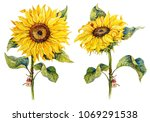 Botanical Sunflowers....