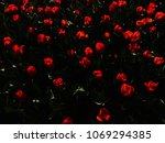 red flowers background | Shutterstock . vector #1069294385