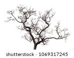dead tree isolated on white... | Shutterstock . vector #1069317245