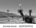 ivory yucca blossom west texas... | Shutterstock . vector #1069344932