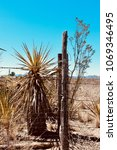 yucca tree fence post west... | Shutterstock . vector #1069346495