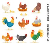 Chicken vector cartoon chick character hen and rooster in love with baby chickens or hen sitting on eggs in hen-coop illustration set of domestic birds in hen-house isolated on white background