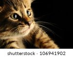 Stock photo portrait of a kitten closeup 106941902