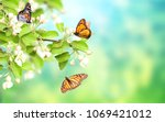 flowers of apple tree and... | Shutterstock . vector #1069421012