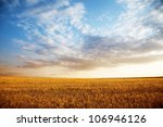 Stock photo summer landscape wheat field at sunset 106946126