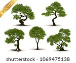 collection beautiful tree... | Shutterstock .eps vector #1069475138