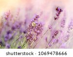 butterfly and bee bumblebee on... | Shutterstock . vector #1069478666