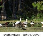 birds of the Florida cypress swamp