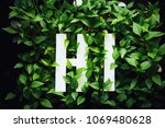 green sprouts in the background ...   Shutterstock . vector #1069480628