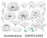 a collection of lotus sketches.... | Shutterstock .eps vector #1069511042