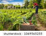 Fresh Vegetable In Wicker...