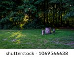 Tree Stump In Haagse Bos ...