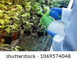 close up of agronomist's hands... | Shutterstock . vector #1069574048