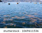 fishing boats floating on blue ...   Shutterstock . vector #1069611536