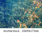 yellow and red aquatic plant in ...   Shutterstock . vector #1069617266