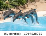 beautiful dolphins swimming.... | Shutterstock . vector #1069628792