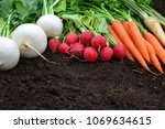 white and red radish carrots... | Shutterstock . vector #1069634615