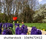 colors of spring in the garden | Shutterstock . vector #1069672412