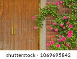 pretty hot pink climbing rose... | Shutterstock . vector #1069695842