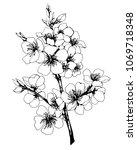 vector  graphic of japan cherry ... | Shutterstock .eps vector #1069718348
