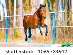 Stock photo chestnut horse jumping at horse show scene horse poster view 1069733642