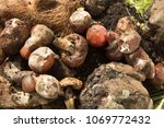 inside of a composting container | Shutterstock . vector #1069772432