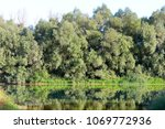 reflection of green trees in... | Shutterstock . vector #1069772936