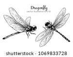 Stock vector hand drawings dragonfly black and white with line art vector illustration 1069833728