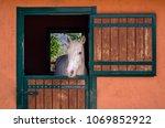Beautiful Purebred White Horse...