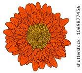 beautiful color sketch  dahlia... | Shutterstock .eps vector #1069877456